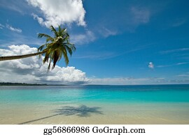 Coconut palm tree on perfect tropical beach