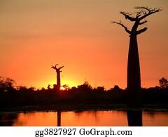 Birds-On-The-Tree-Silhouette - Baobab Silhouette