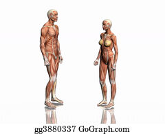 Anatomically - Anatomy Of Man And Woman.