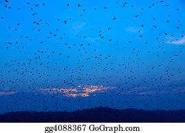 Birds-On-The-Tree-Silhouette - The Birds