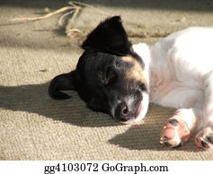 Funny-Toy-Train - Fox Terrier Puppy