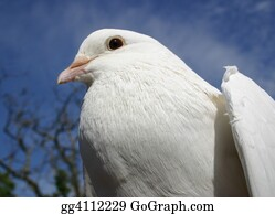 Blue-Sky - Beautiful Dove