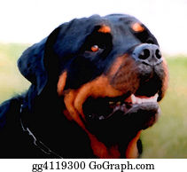 Rottweiler - Watching Dog