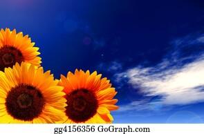Plant-Life - Sun Flowers
