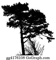 Plantation - Tree Silhouette