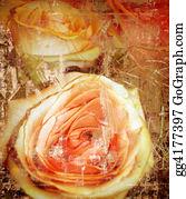 Pink-Rose - Grunge Background