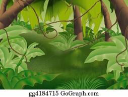 Forest - Virgin Forest