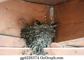 Cardinal-Bird - Barnswallow Nest