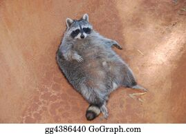 Furry-Tail - Relaxing Racoon