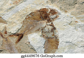 Fossil - Fish Fossil On A Stone