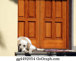 Sense-Of-Smell - Dog In Front Of The Door
