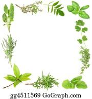 Herbs - Organic Herbs