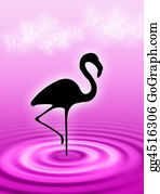 Flamingo - Flamingo In The Water