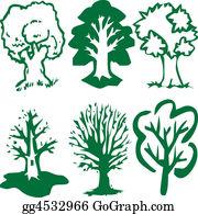 Eucalyptus - Trees Of Green