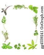 Herbs - Fresh Aromatic Herbs