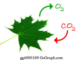 Leaf-And-Oxygen - Photosynthesis 2