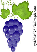 Grape-Leaf - Grapes On The White