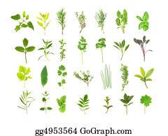 Herbs - Large Herb Leaf Selection