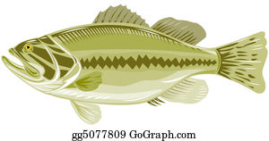 Largemouth-Bass - Sea Bass