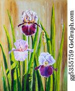 Beards - Irises