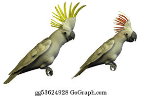 Jungle - Two 3d Parrots Isolated