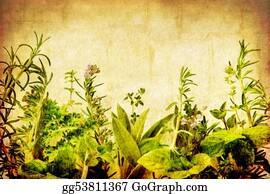 Herbs - Grunge Herbs