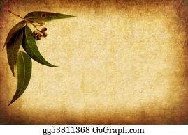 Eucalyptus - Grunge Gumleaves Backgrou