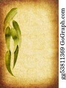 Eucalyptus - Grunge Gum Leaves
