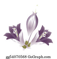 Orchid-Flower - Purple Flower