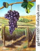 Vine - Grape And Vineyard