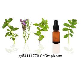 Herbs - Healing Herbs