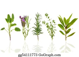 Therapy - Herb Leaf Selection