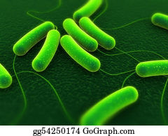 Germs - E-Coli Bacteria