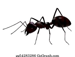 Jaw - Vector Ant