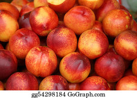 Cultivation - Agriculture-Peaches