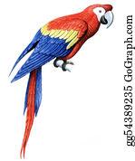 Head-And-Shoulders -  Bird Parrot Macaw
