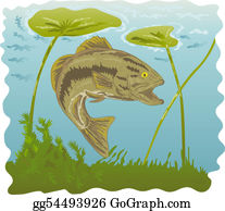 Largemouth-Bass - Largemouth Bass With Water Lilies