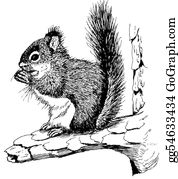 Squirrel - Red Squirrel