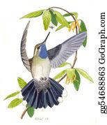 Bird-Feeder - Blue-Throated Hummingbird