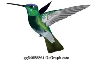 Bird-Feeder - Magnificent Hummingbird