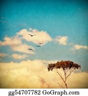Eucalyptus - Dreamy Sky And Tree