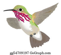 Bird-Feeder - Calliope Hummingbird