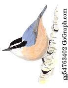 Bird-Feeder - Red-Breasted Nuthatch