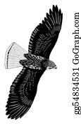 Prairie - Red-Tailed Hawk