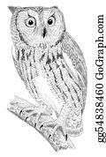 Forest - Western Screech-Owl