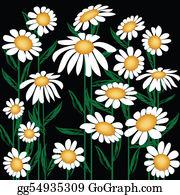 Chrysanthemum - Chrysanthemum Leucanthemum
