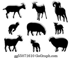 Lamb - Sheep And Goats In Silhouette