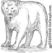 Bear-Paw - Drawing  Of A Brown Bear