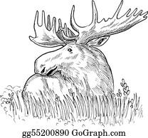 Antler - Drawing  Illustration Of A Moose