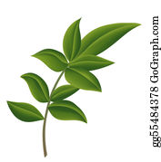 Eucalyptus - Leaf